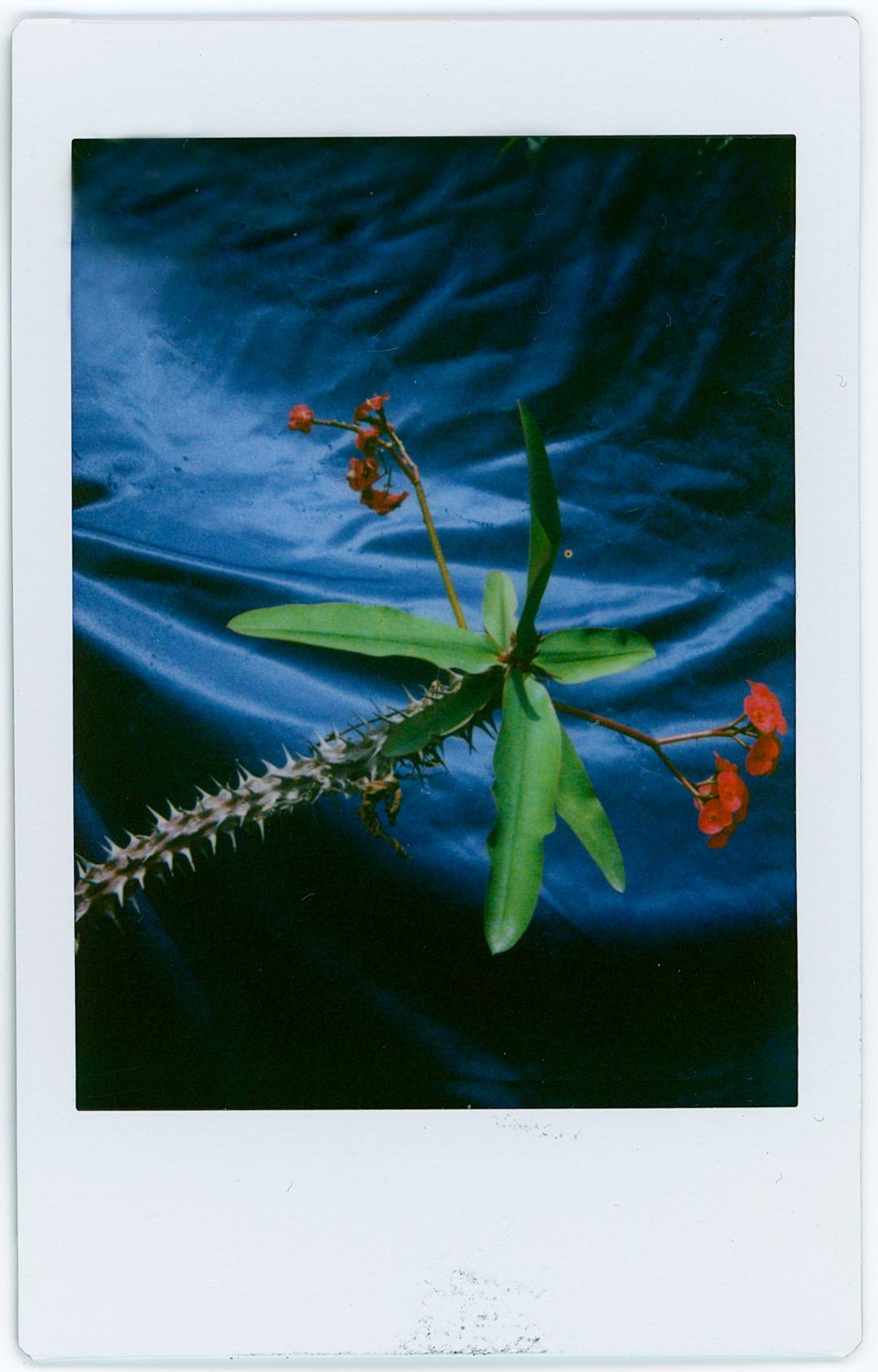 cortina-azul-5.jpg