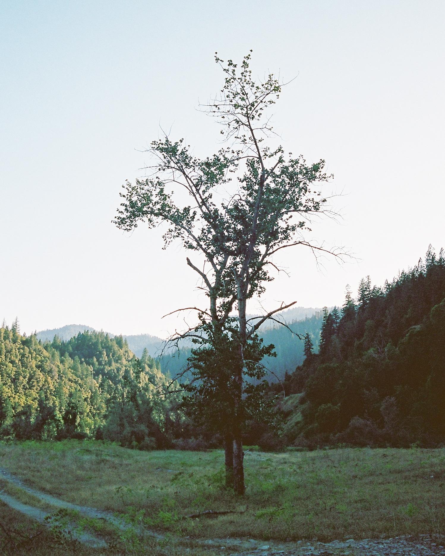 JH Ranch_Roll_2301-20.jpg