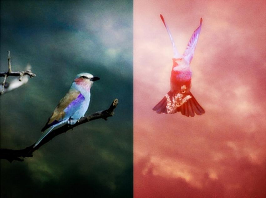 Love Birds      -