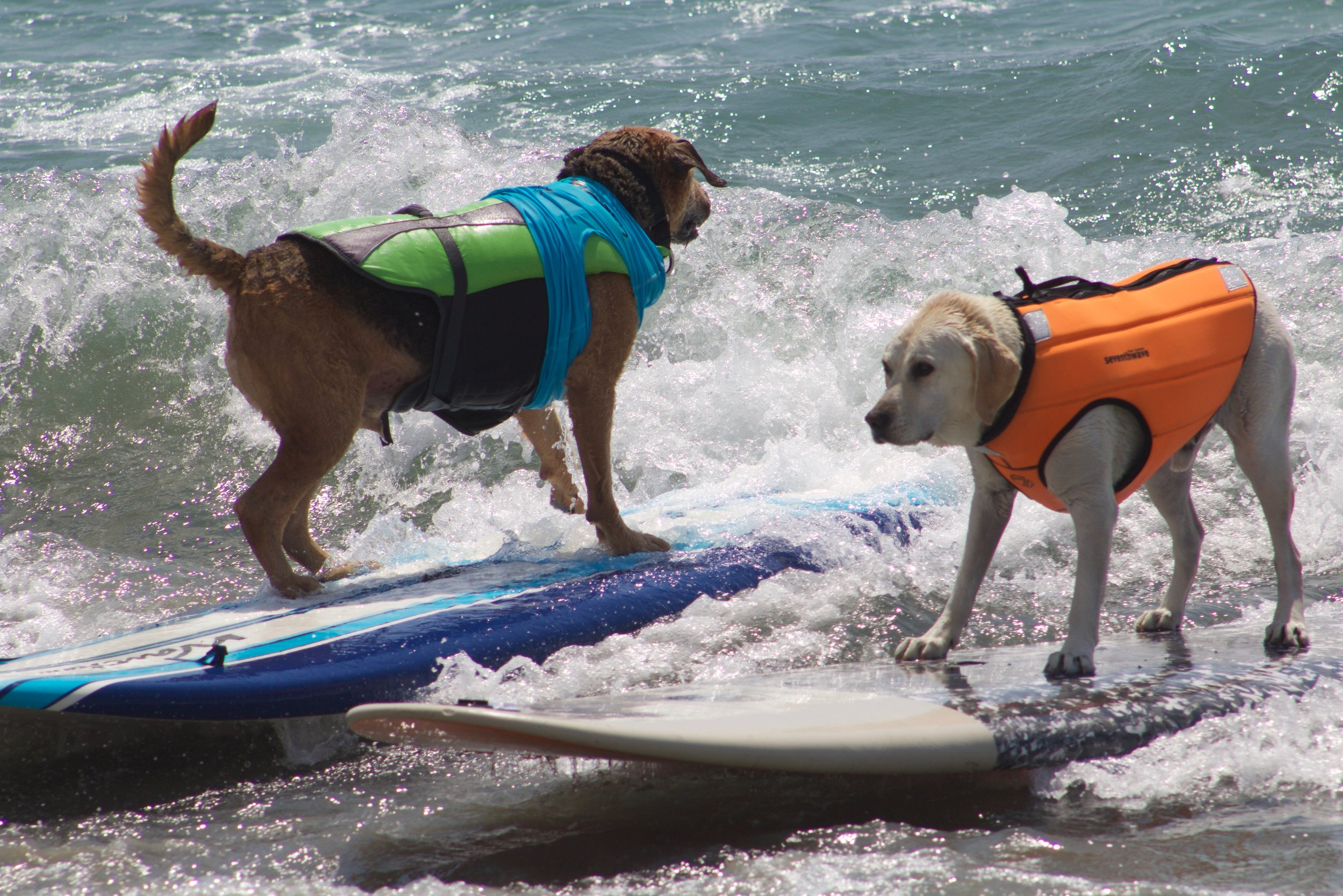 Backwards Beezel and Haole Boy Imperial Beach Surf Dog.jpg