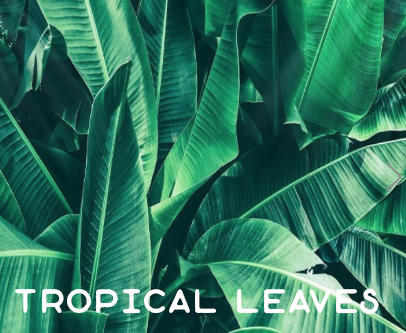 tropical-leaves.png