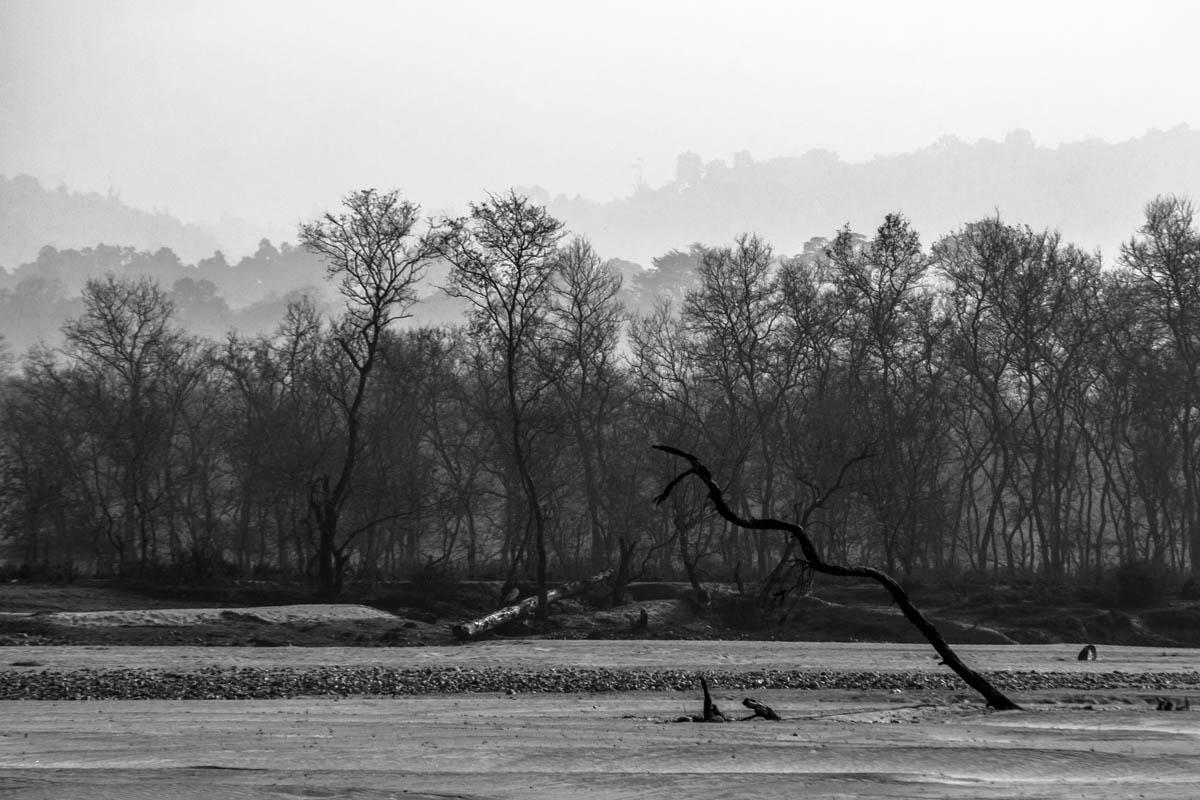 Ganges - Haridwar, February 2014