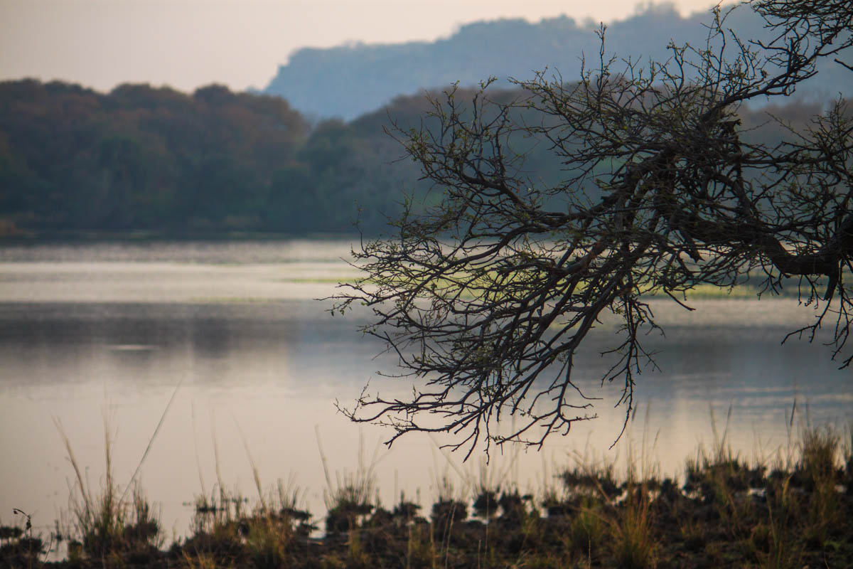 Ranthambhore National Park, November 2011