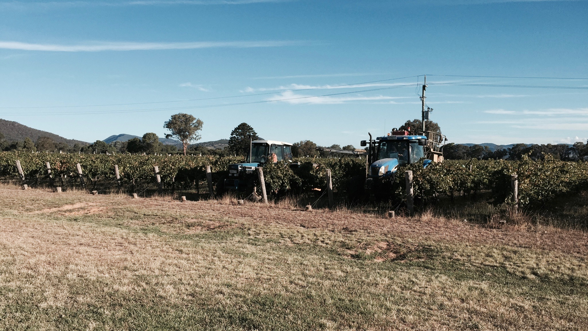 Vineyard in Central NSW