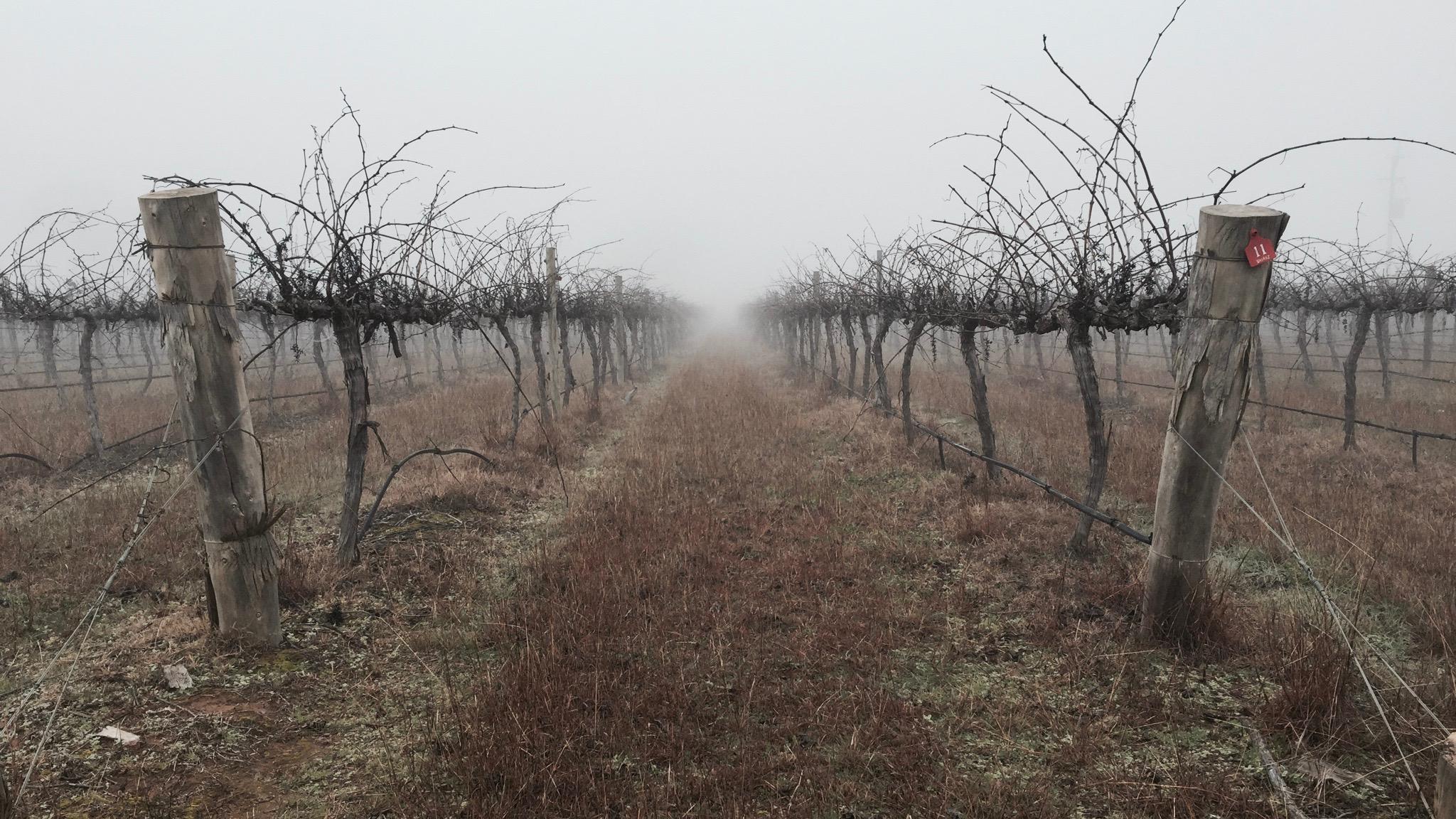 Blue Wren Vineyard Winter