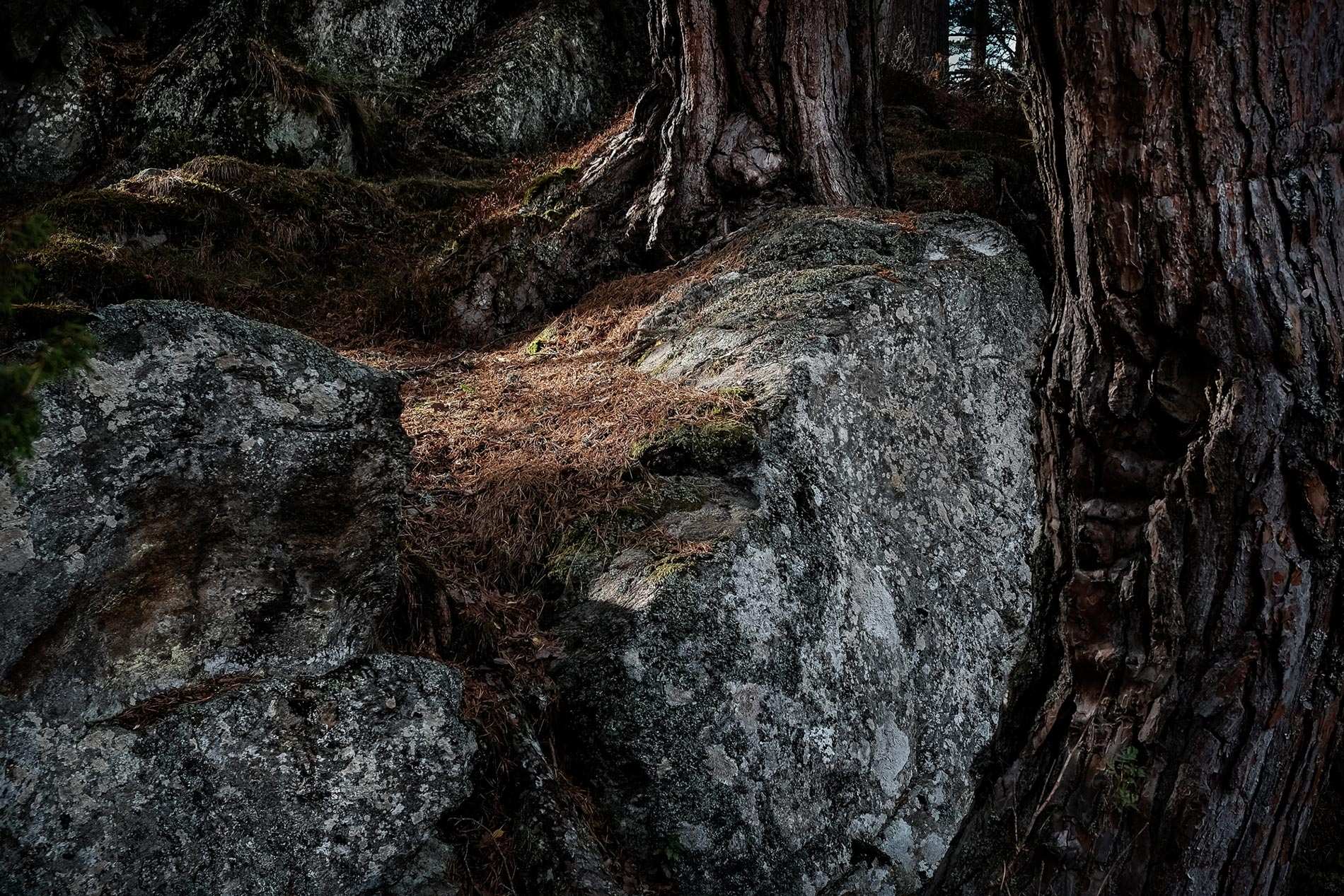 Rock and pine trees - Speyside