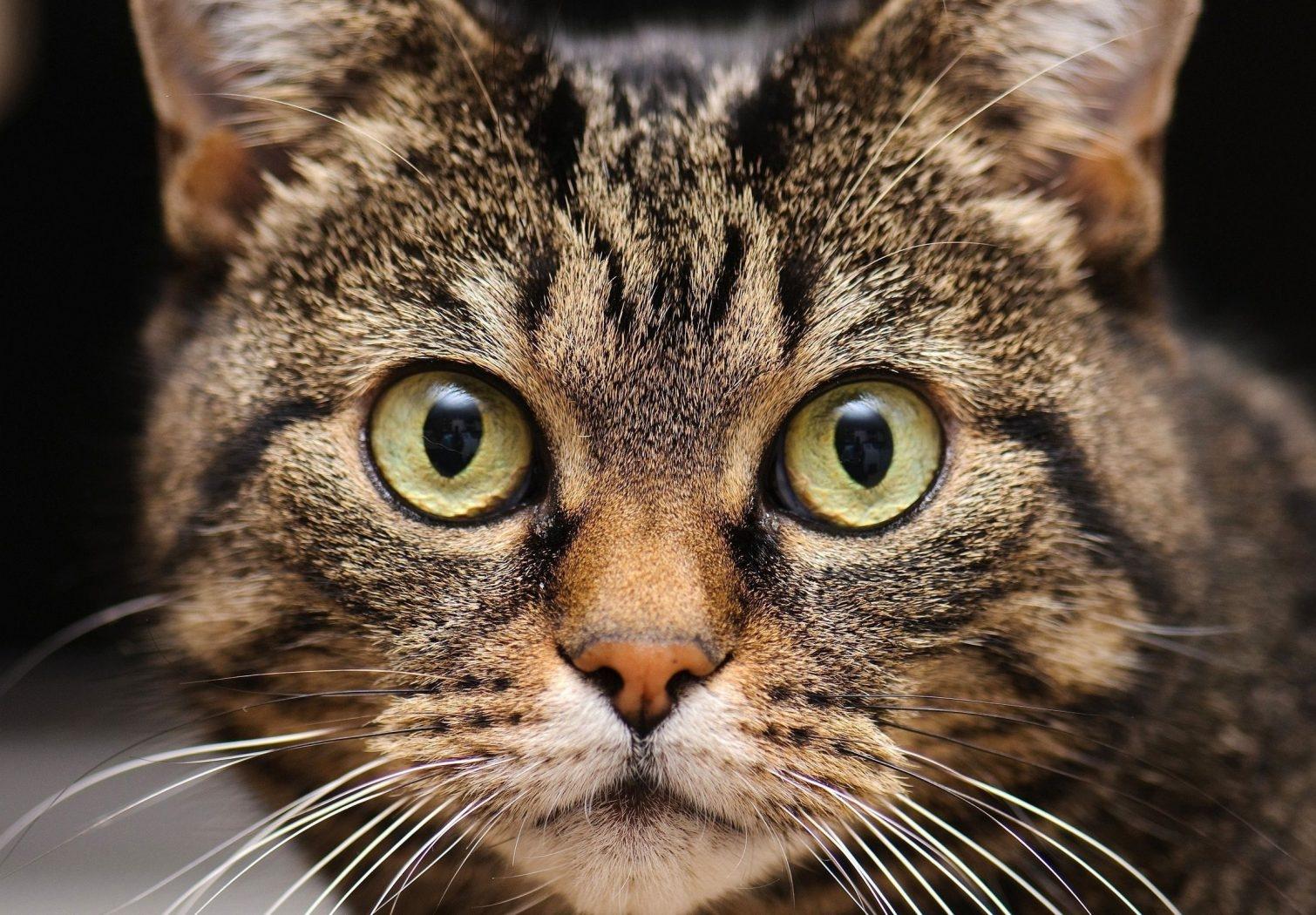 銃口、猫、ひげ、目-1680x1050.jpg