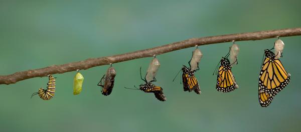 butterfly, transformation, change, change management, Yan Maschke, executive coaching, Cleveland Ohio