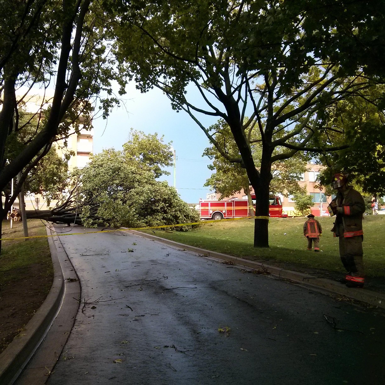Tree Aug2 2015.jpg