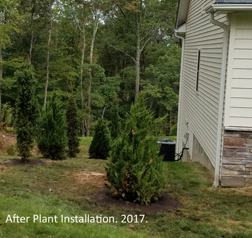 After Plant Installation