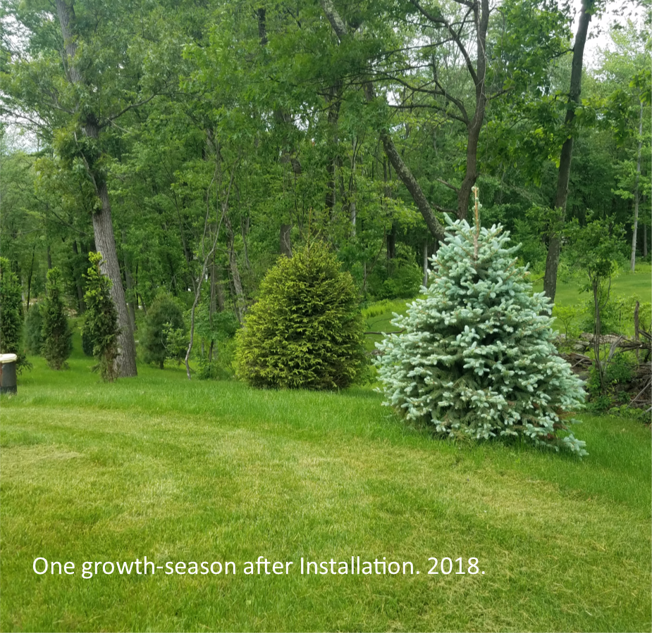 One growth-season later...