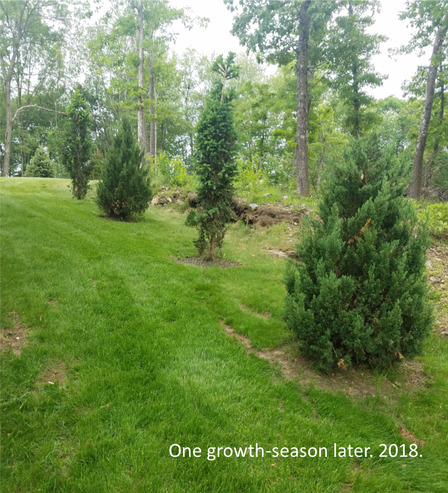 One growth-season later....