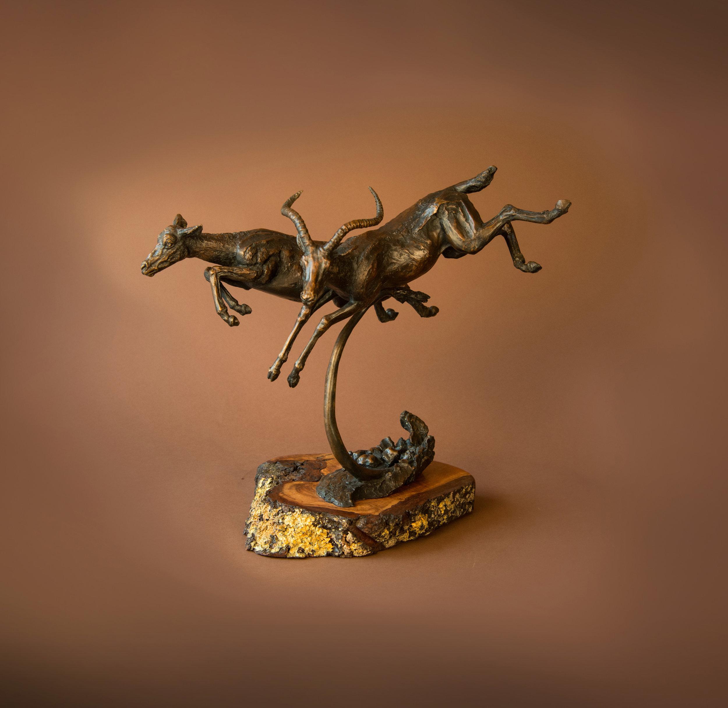 antelopes03 copy.jpg
