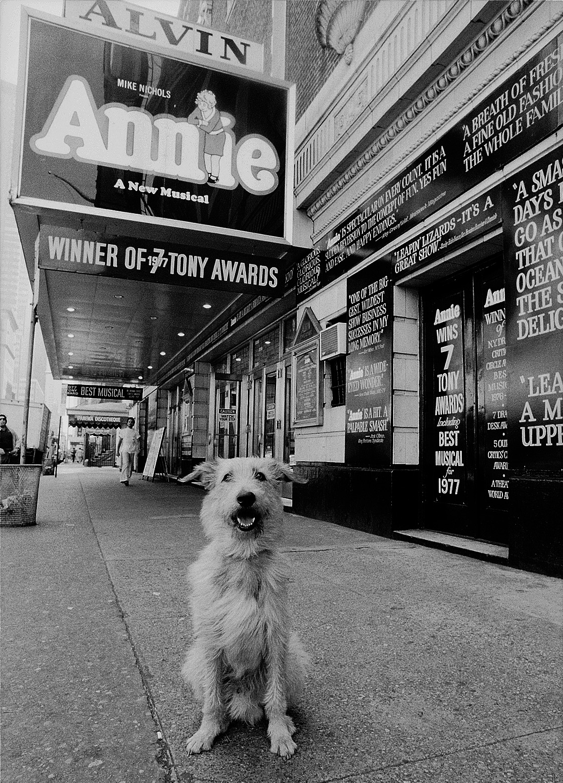 """Sandy"" the canine star of the hit Broadway show ""Annie."""