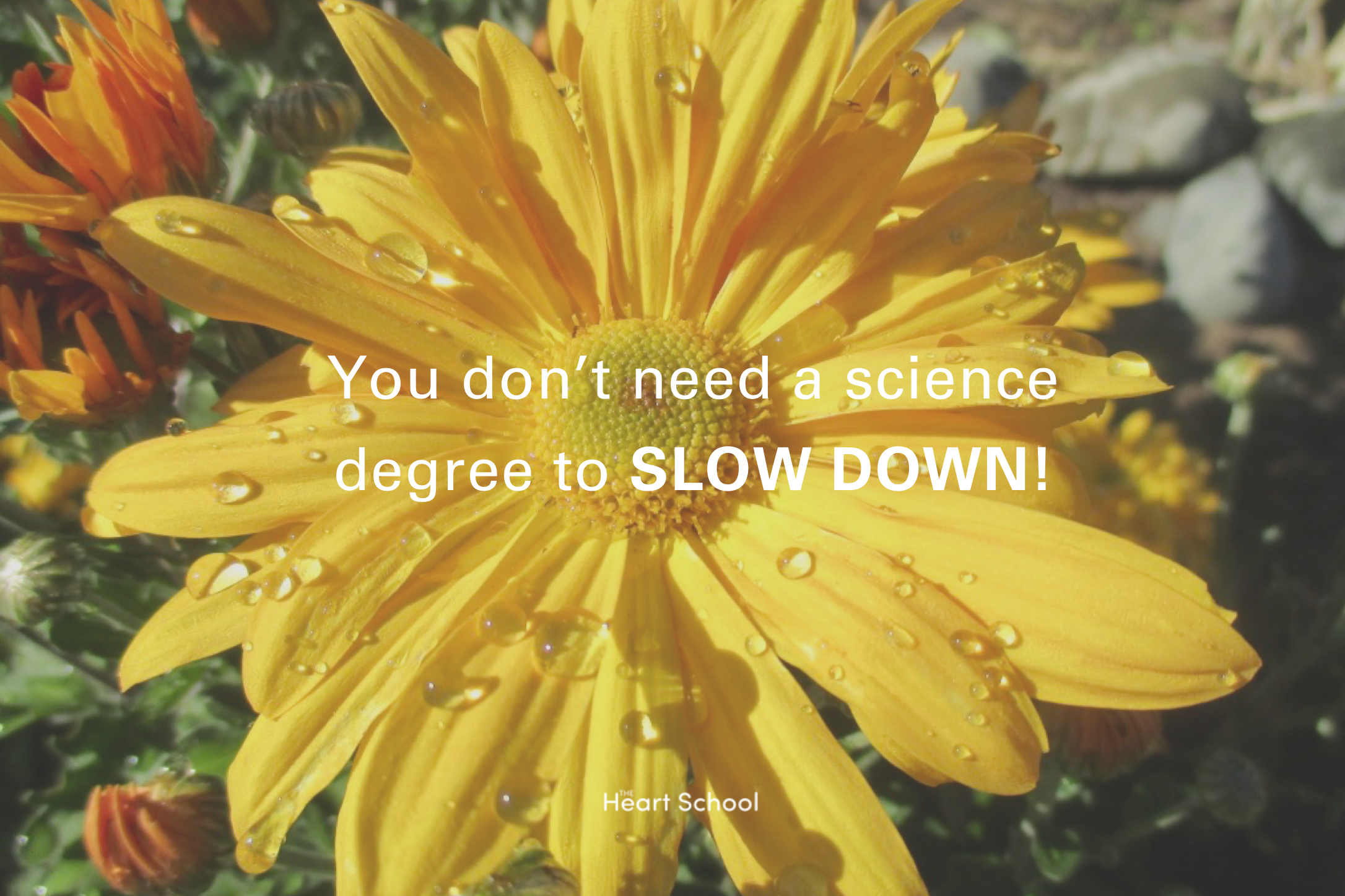 """You do not need to have a degree in science to connect with nature! The only thing you need to do is to slow down and """"just notice"""", to be aware, to be open to what is happening right here in front of you. Notice the sparrow taking a bath in the puddle, the raindrops on the petals. Slow down and notice!"""