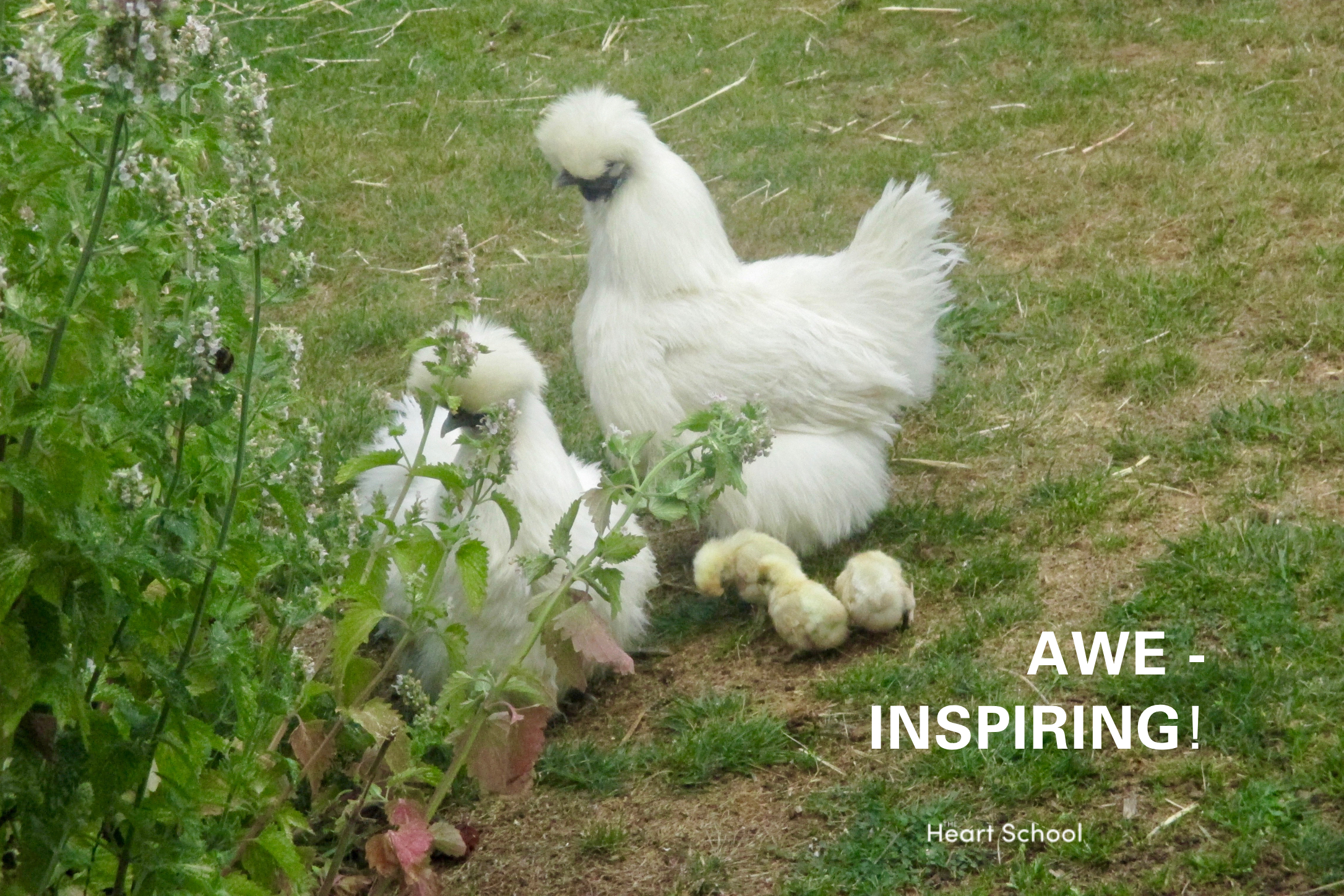 """""""Life is a miracle, handle it with care"""" - Caroline Naoroji  Authentic experience at its finest! There is nothing like new life to inspire wonder in our children and touch their hearts. Baby chicks in books are cute, but in real life?"""