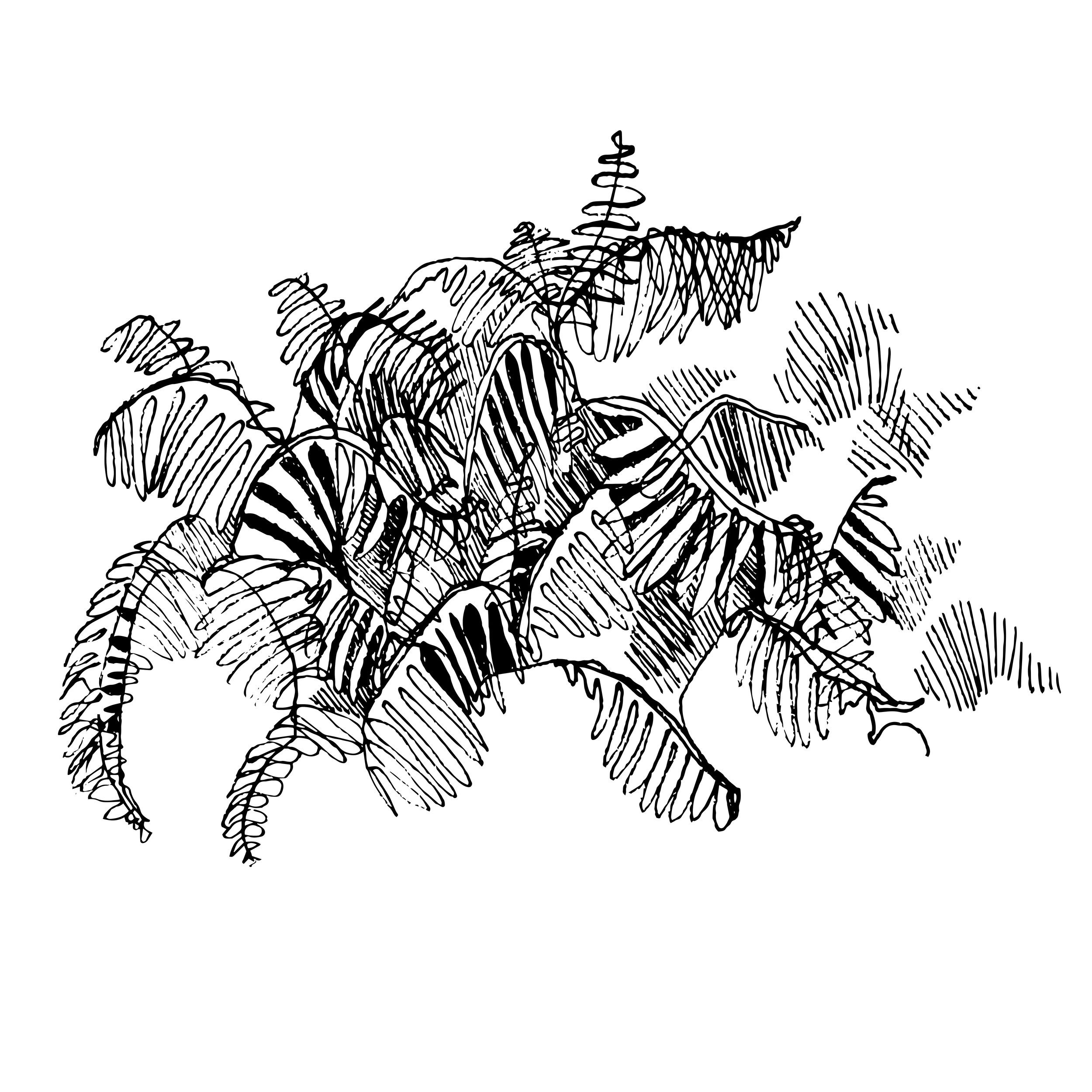 fernfloor copy.jpg