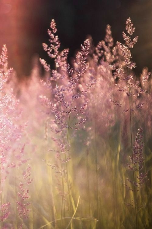 Meadow with summer light