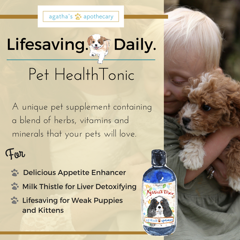 agatha's puppy saving appetite enhancer