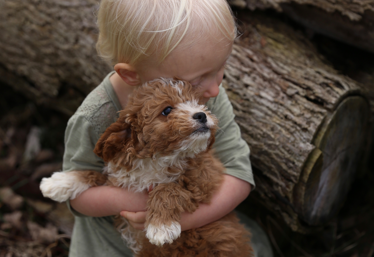 Dog Flea Control Products Toxic Effects On Children Article Image Header