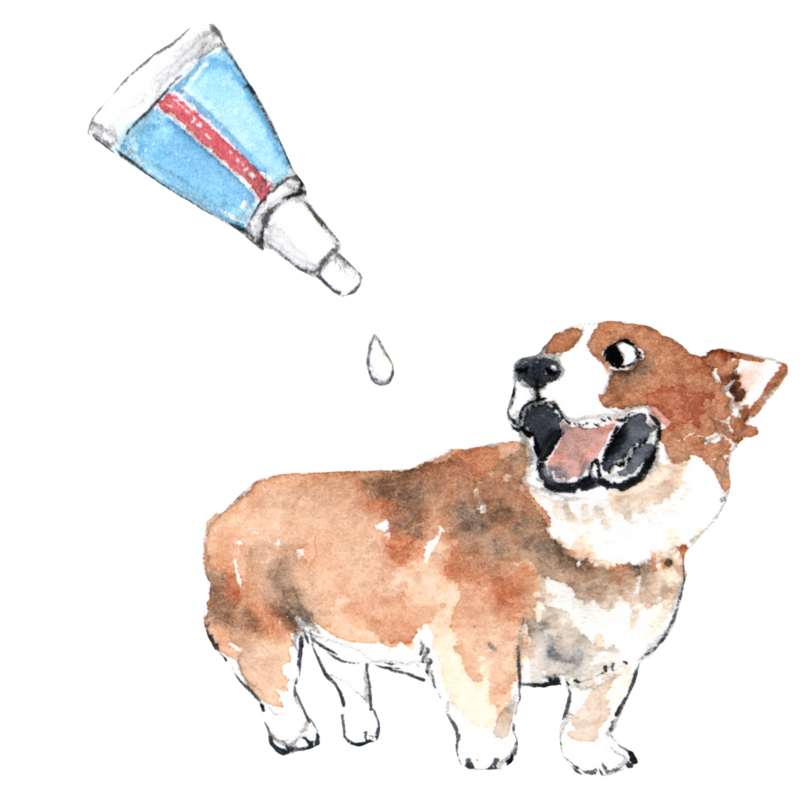 Are flea products for dogs toxic?