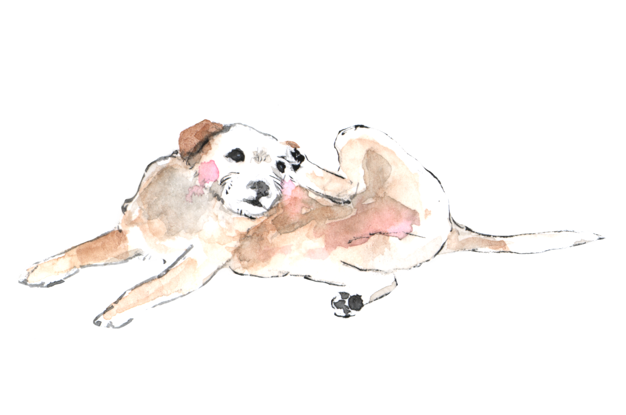 Help for dog skin problems article Agatha's Apothecary