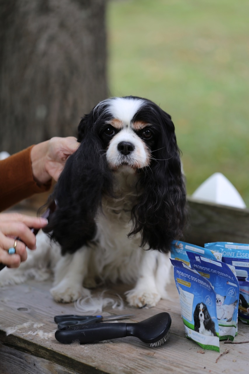 Agatha of Agatha's Apothecary dog grooming article and tips