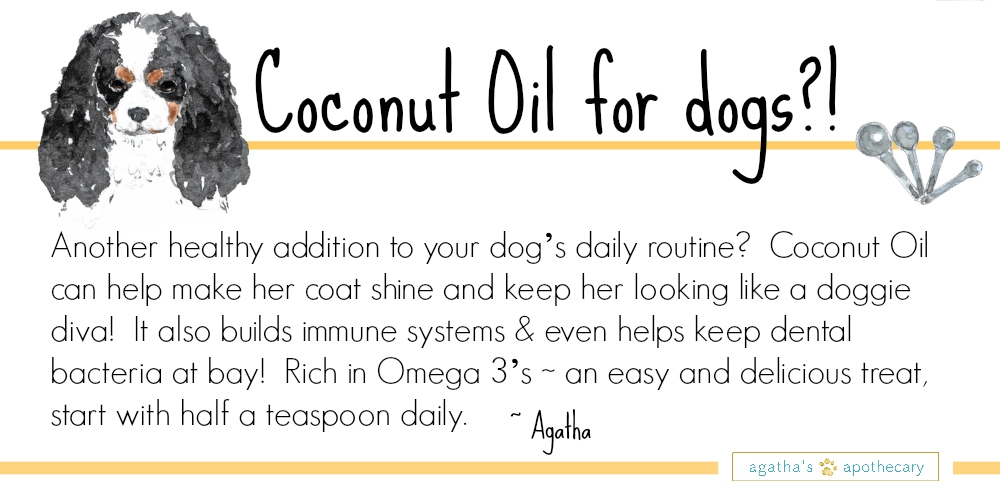 Agatha's Apothecary article on coconut oil for dogs