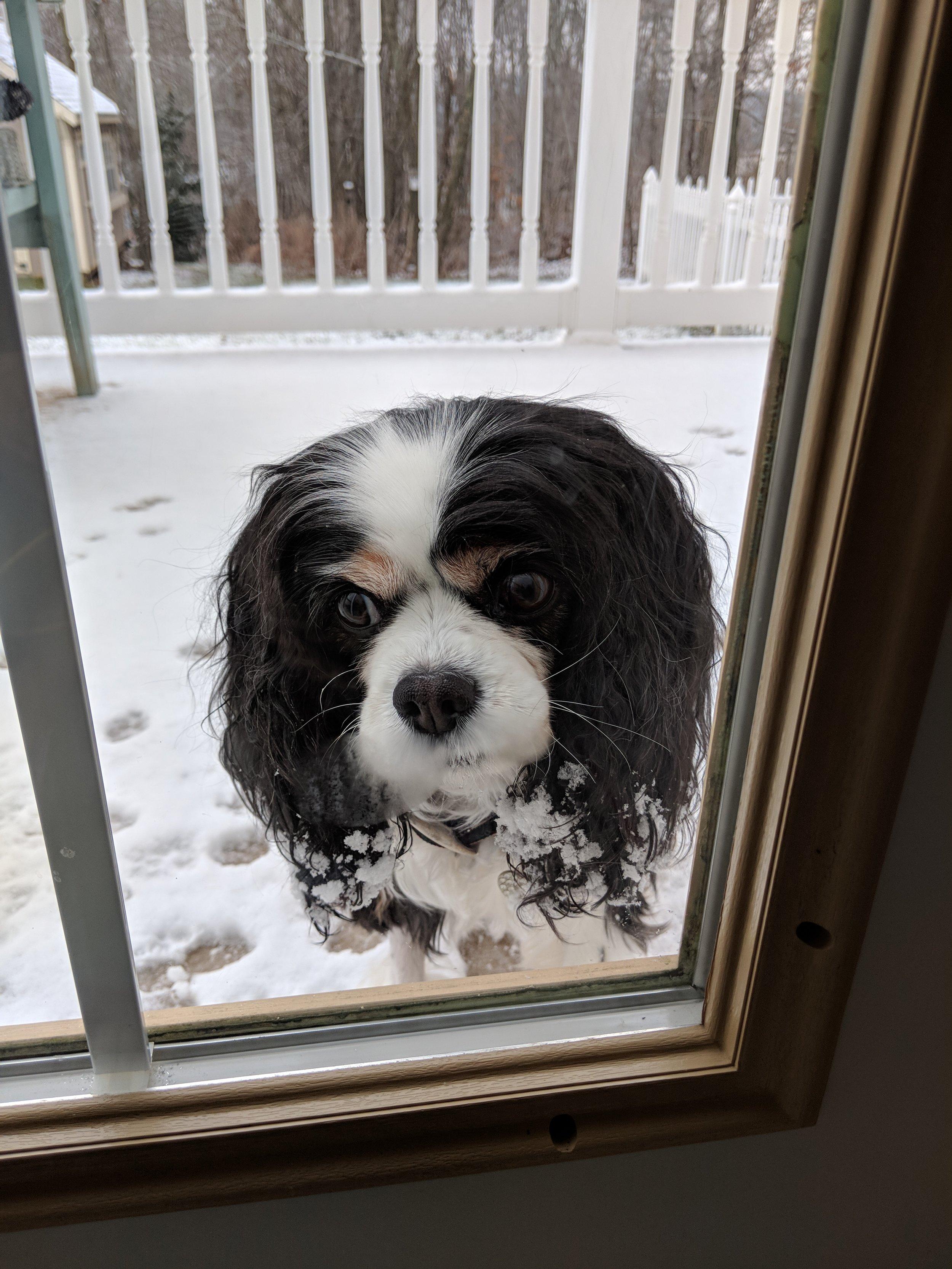 Agatha loves the snow.