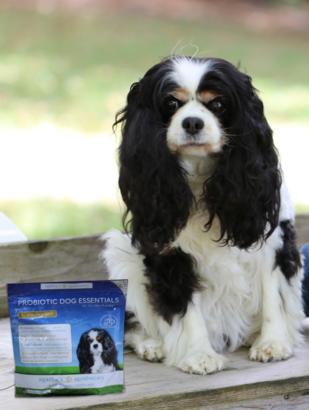 Agatha's+Apothecary+Probiotic+Dog+Essentials+Agatha.png