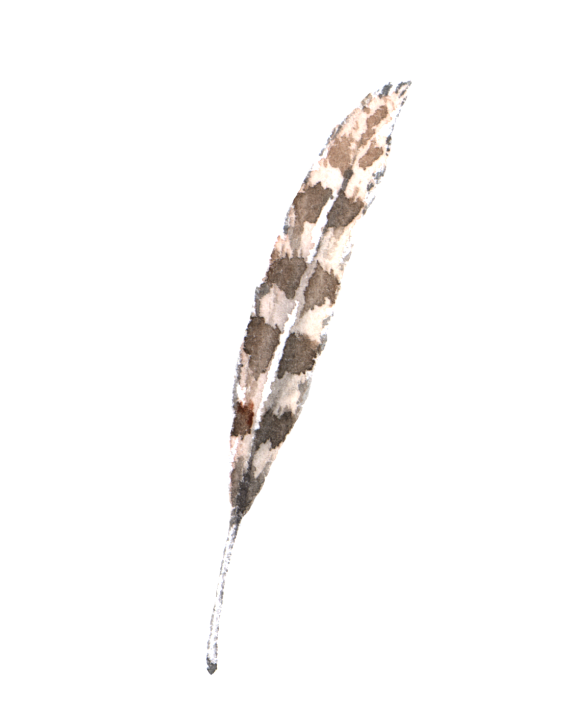 Feather brown and white vintage watercolor Vianneart