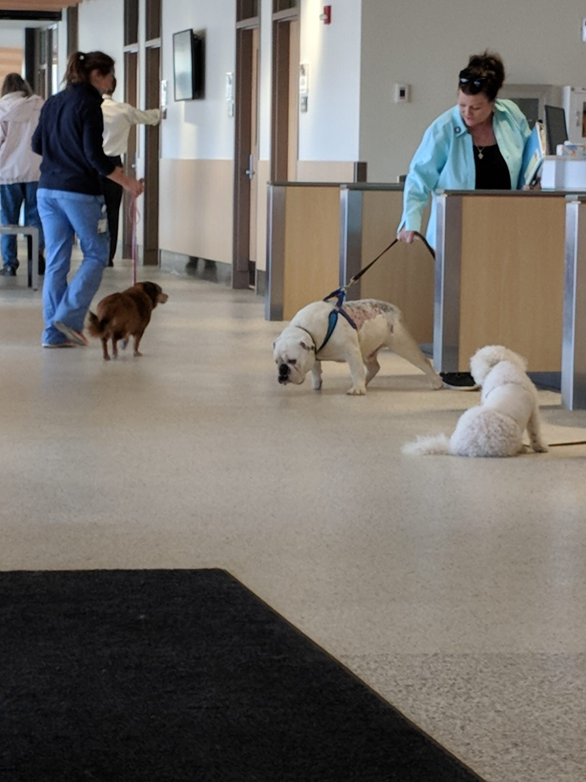 dogs-at-veterinariany-clinic.jpg