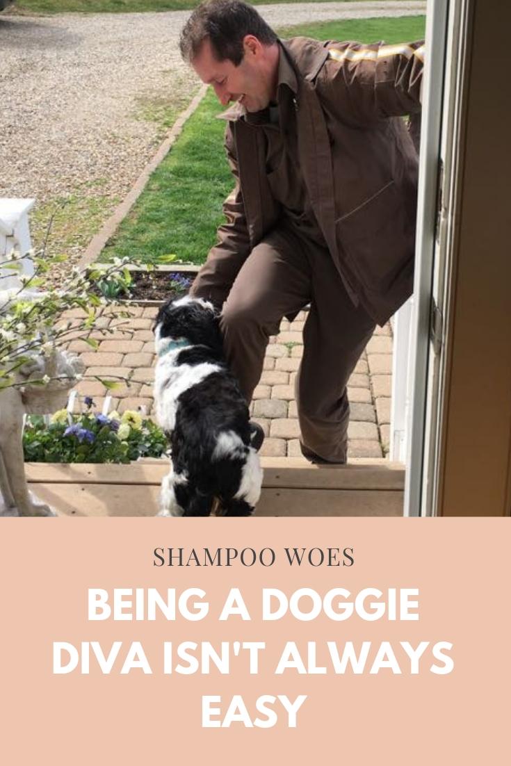 Agatha the shampoo poster child blog post.