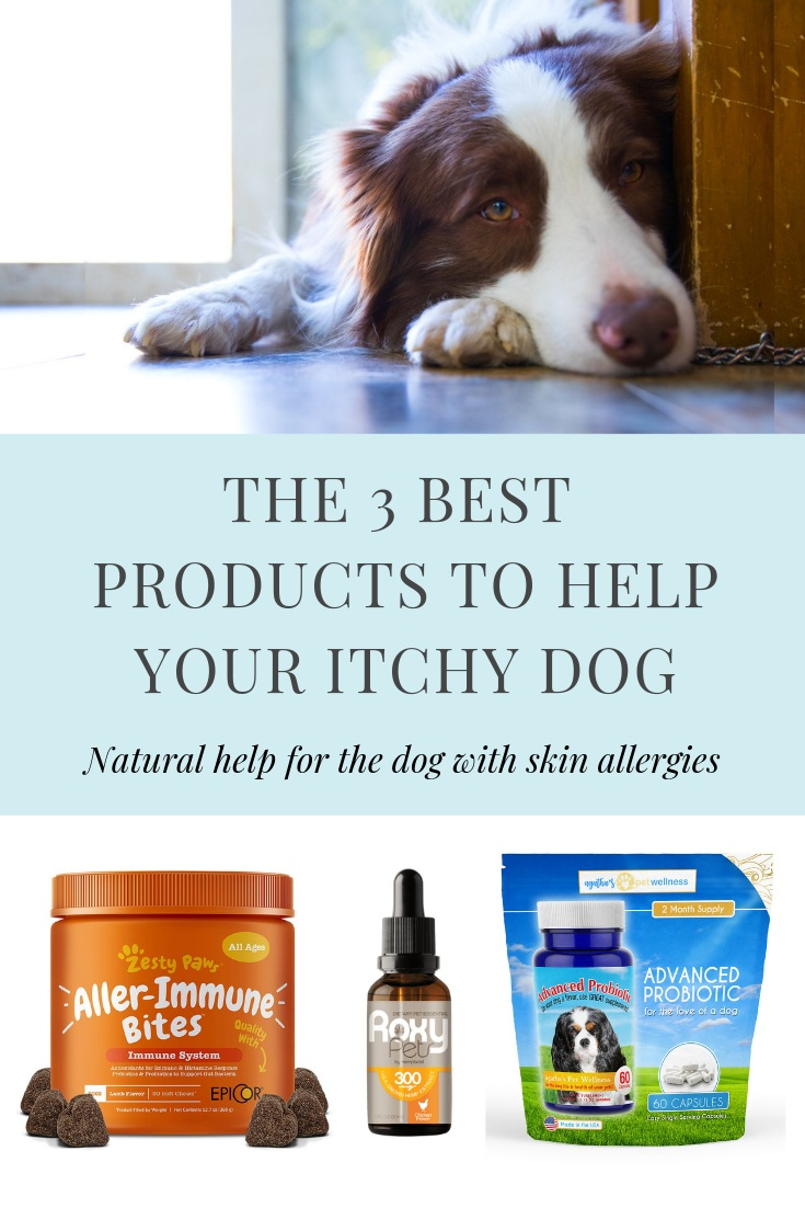 3+Best+products+for+dogs+with+skin+problems.jpg