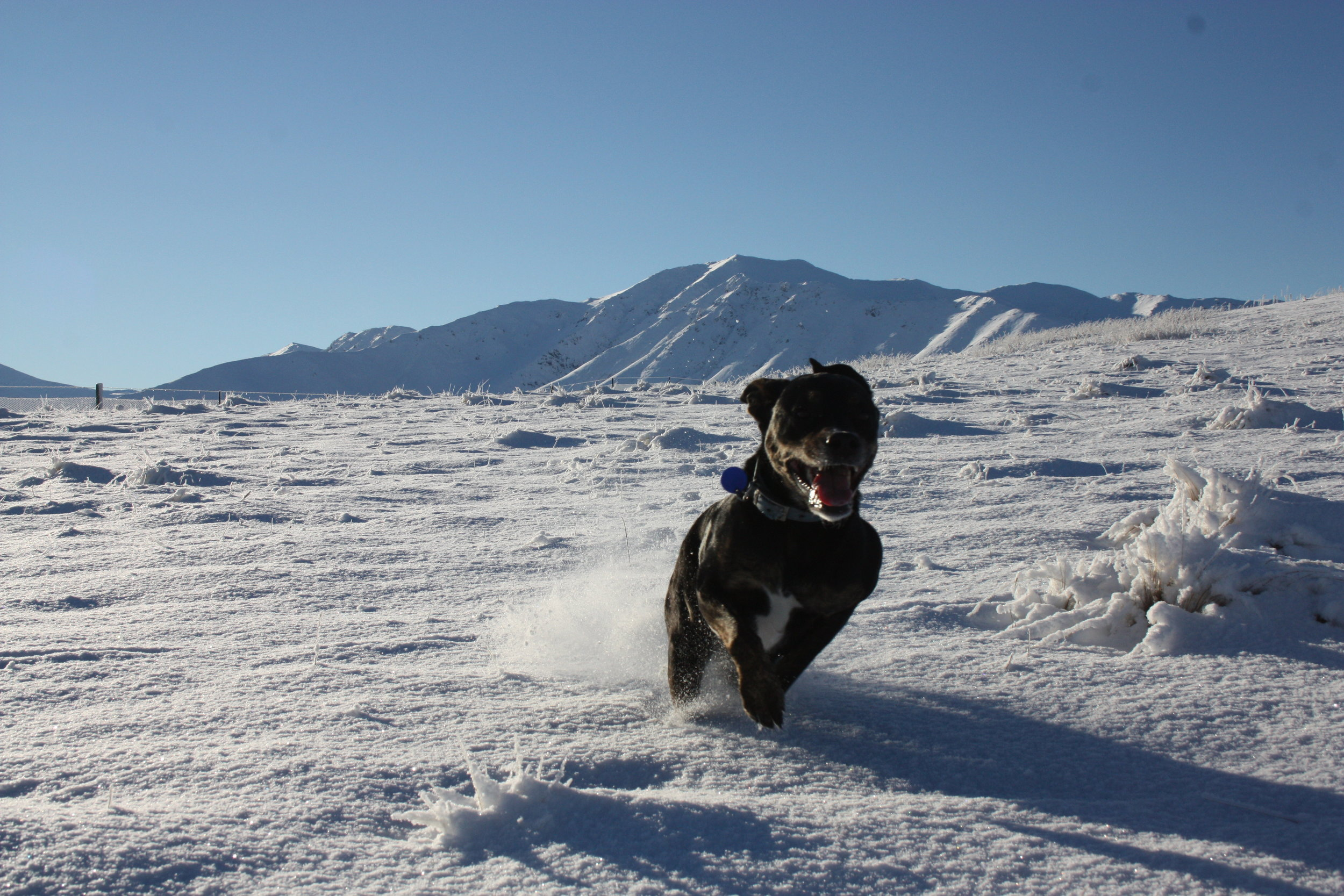 Even the dog enjoyed the freedom to play!