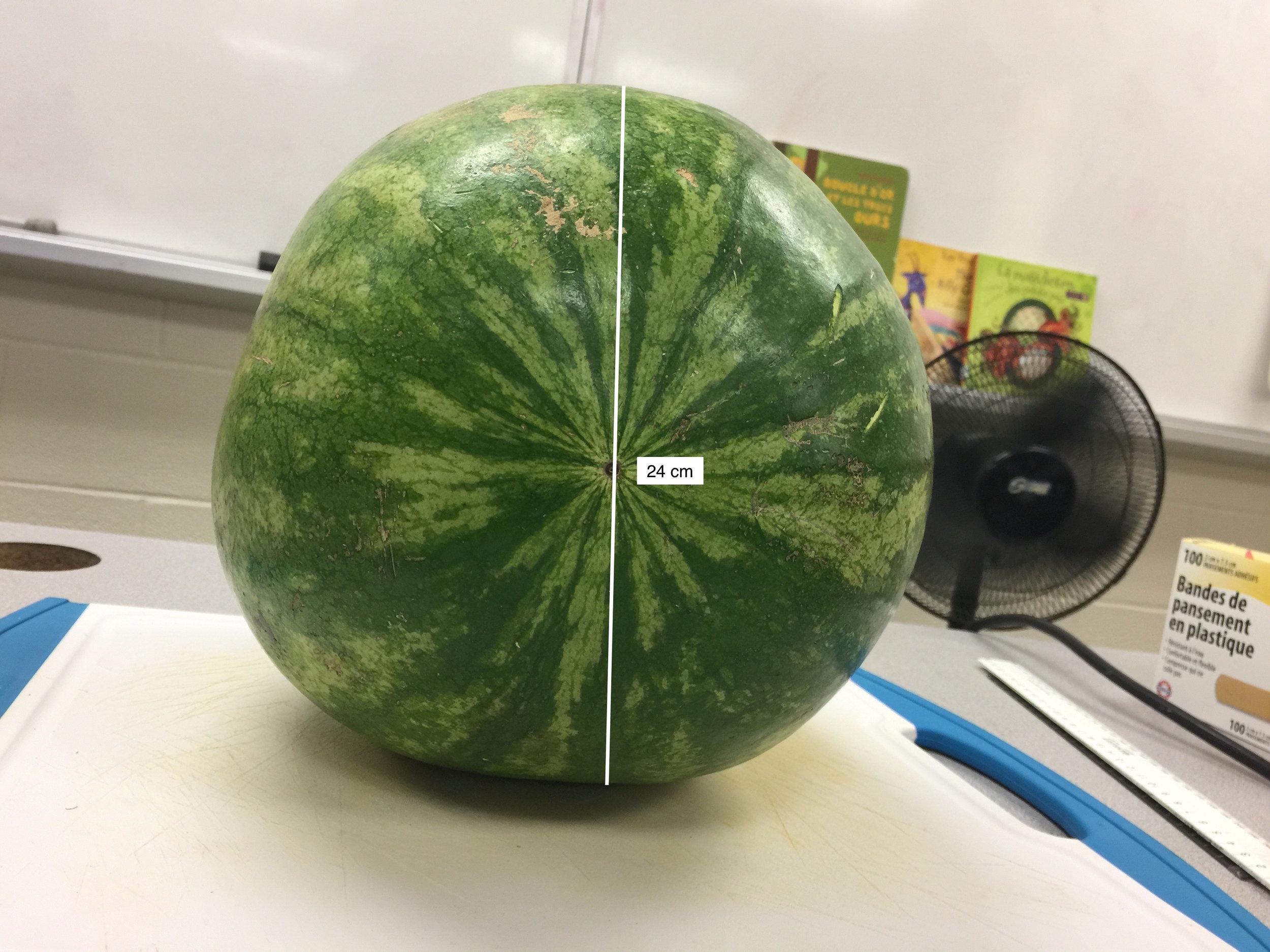 watermelon-front.jpg