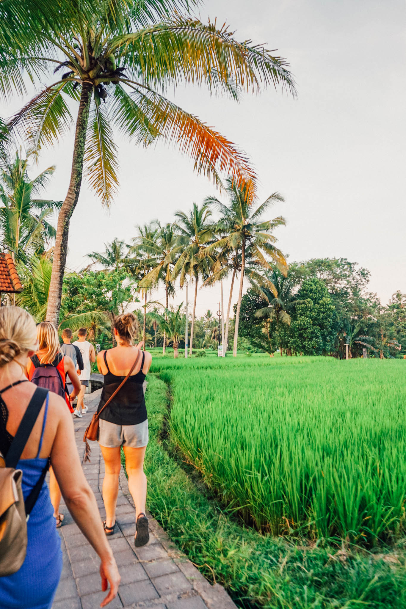Walking among the rice fields in Ubud