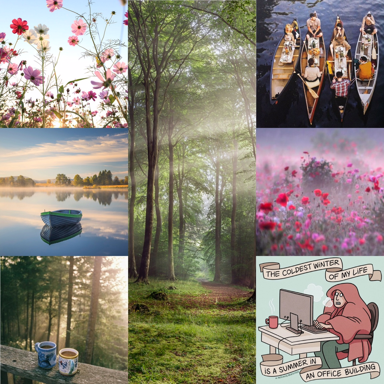 sources:  Cosmo  Forest  Boating party  poppies   Office meme  Coffee Cups  Lake