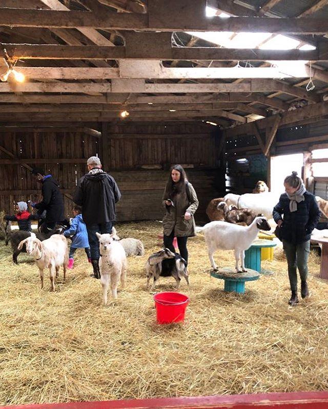Instant mignonnerie a @islandhillfarm 😍 • • #samedimatindouceur #islandhillfarm #lapins #chèvres #chevreaux #ferme #animaux #ipe #carrefourdelislesaintjean #jeparlefrançaisettoi