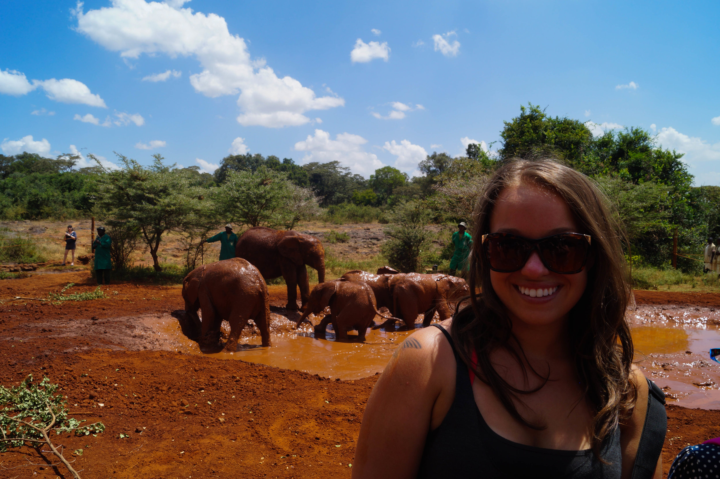 Visiting the orphaned elephant calves at the David Sheldrick Elephant Orphanage