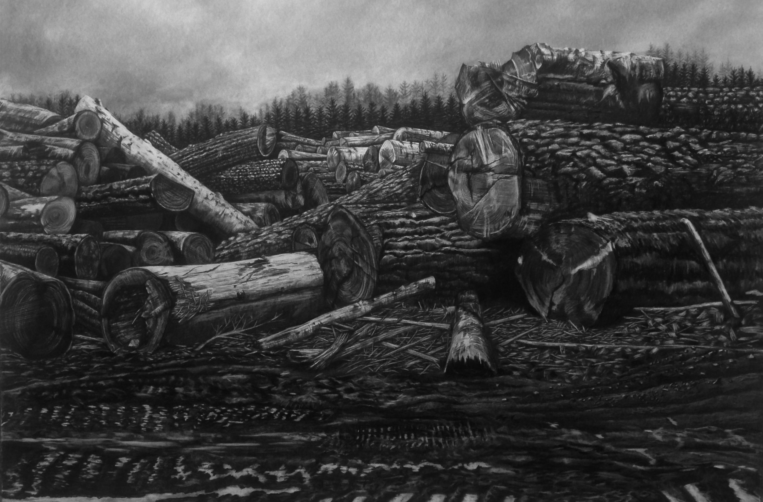 Rot Pile , 2017, charcoal (traditional and wild harvested) on paper, 40x60 inches