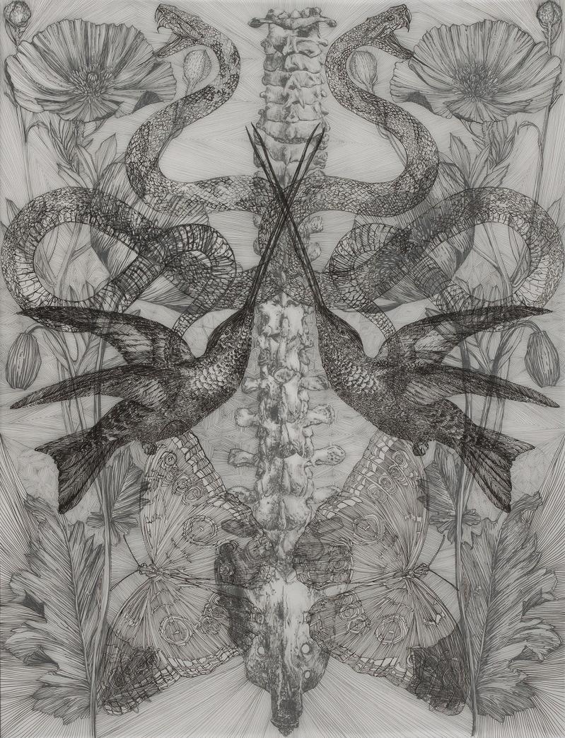 Danielle Rae Miller, Two Hummingbirds, ink on vellum, 26inx20in-web.jpg
