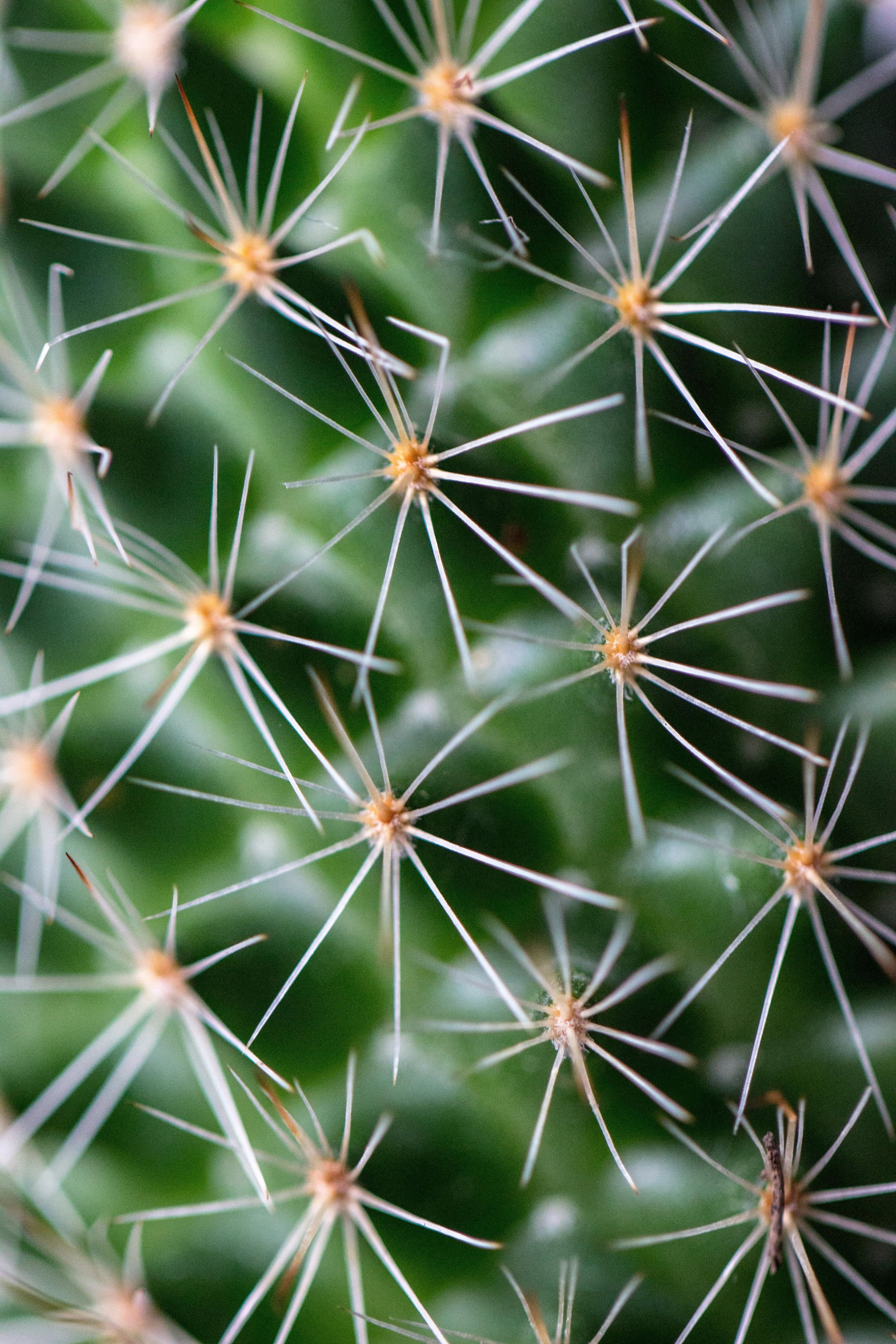 cactuszoom.jpg