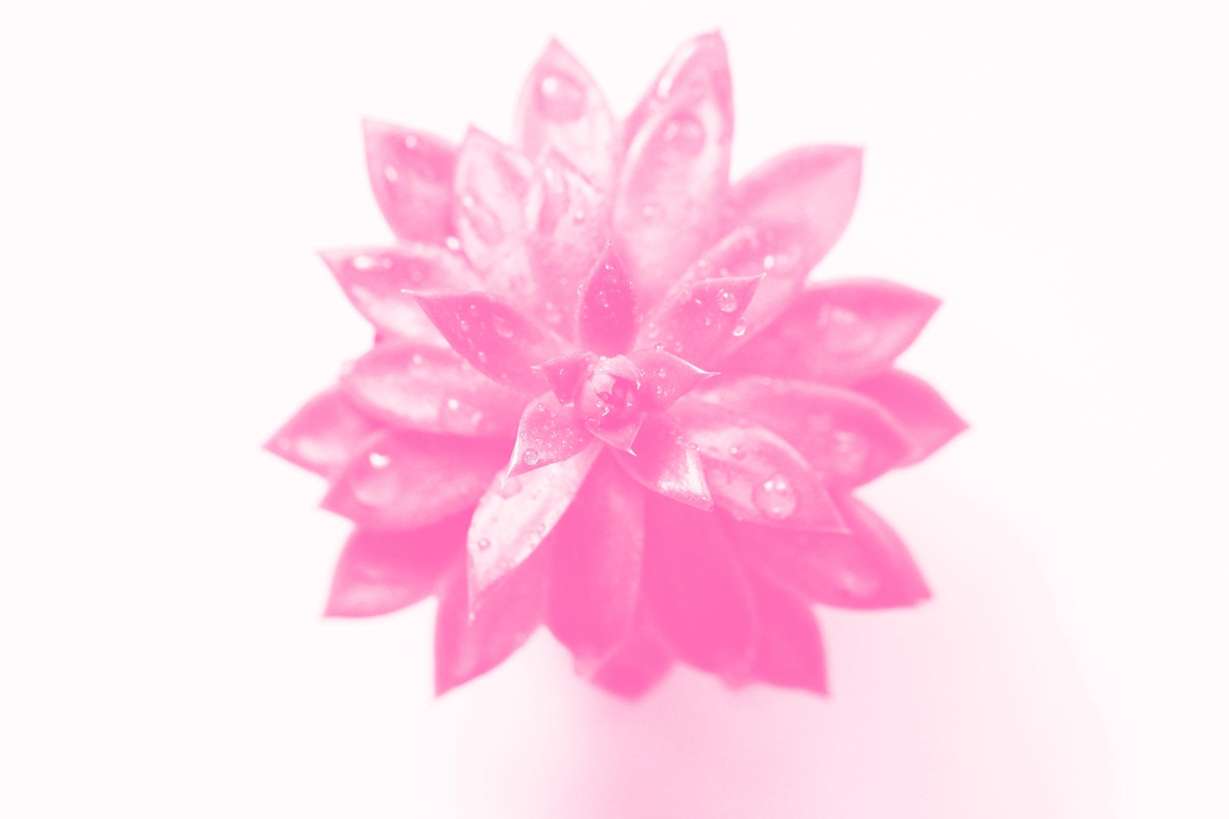 IMG_3932_pink.jpg