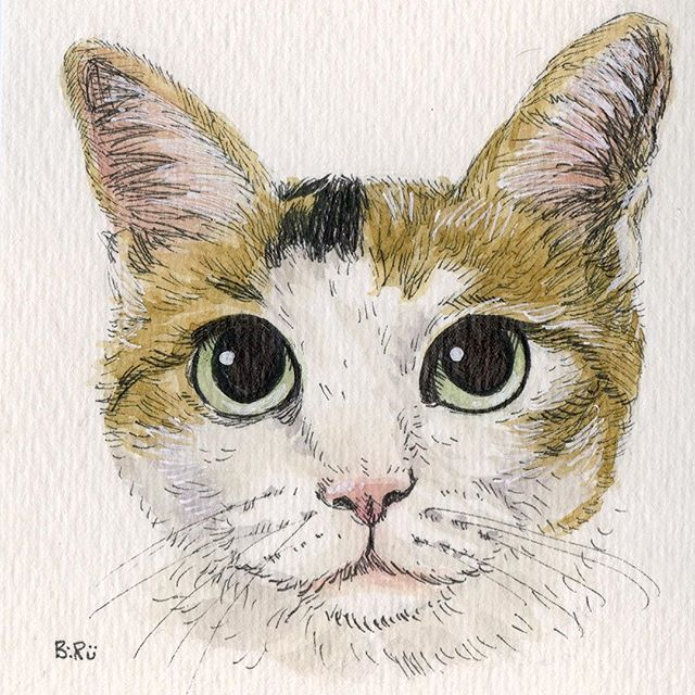 #catsofinstsgram #petportrait #watercolors #kitty #cat #drawing #painting #staedtler