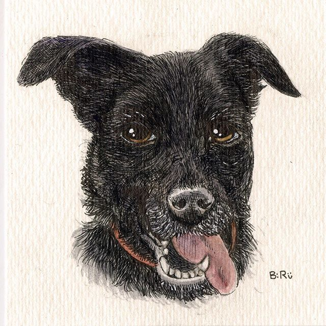 Dakota #labradorretriever #blacklab #petsofinstagram #pup #watercolors #ink #staedtler #drawing #artistsoninstagram