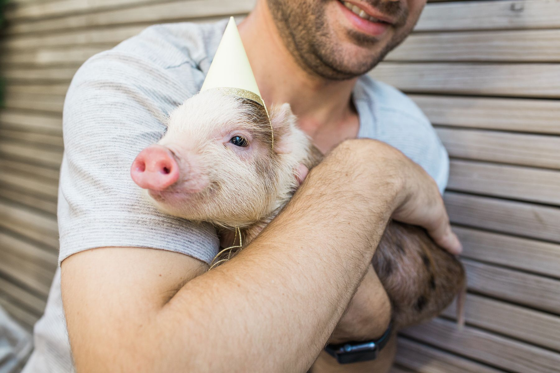 brooklyn-teacup-piglet-party