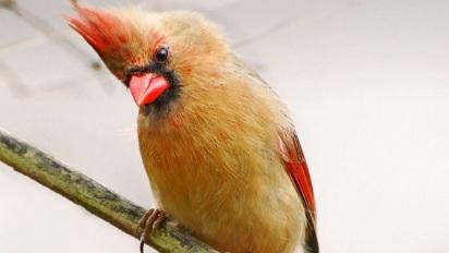 Bird Language.png
