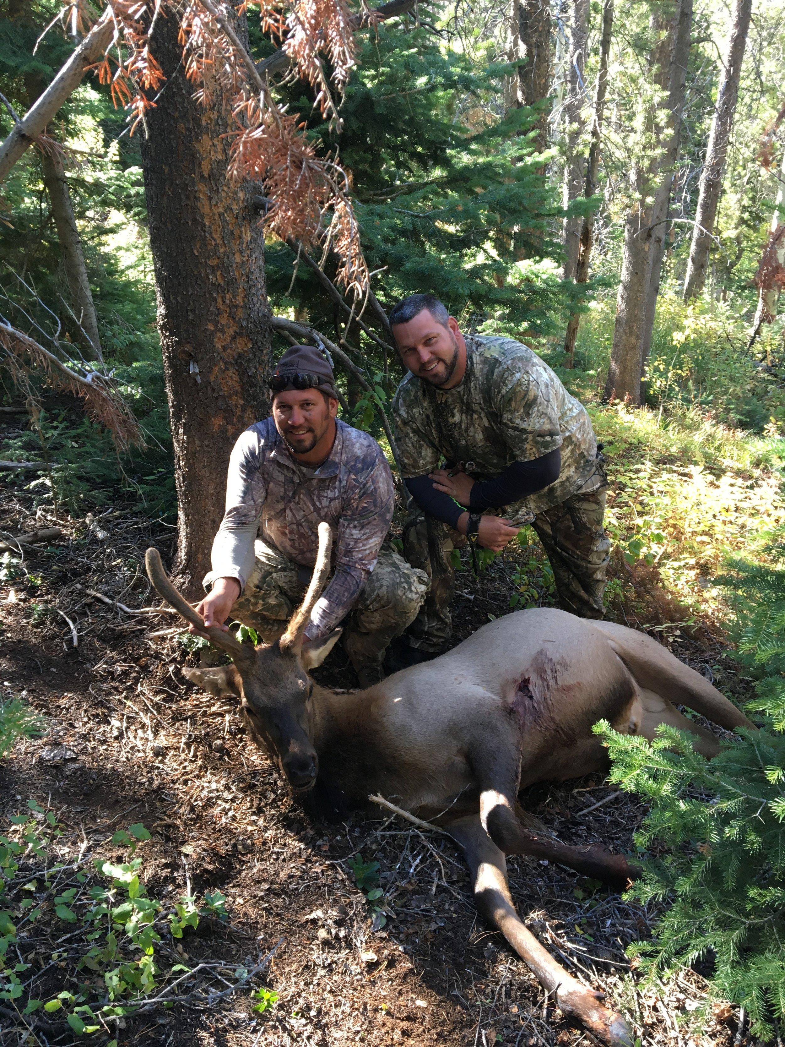 Wyoming- Elk, 2016