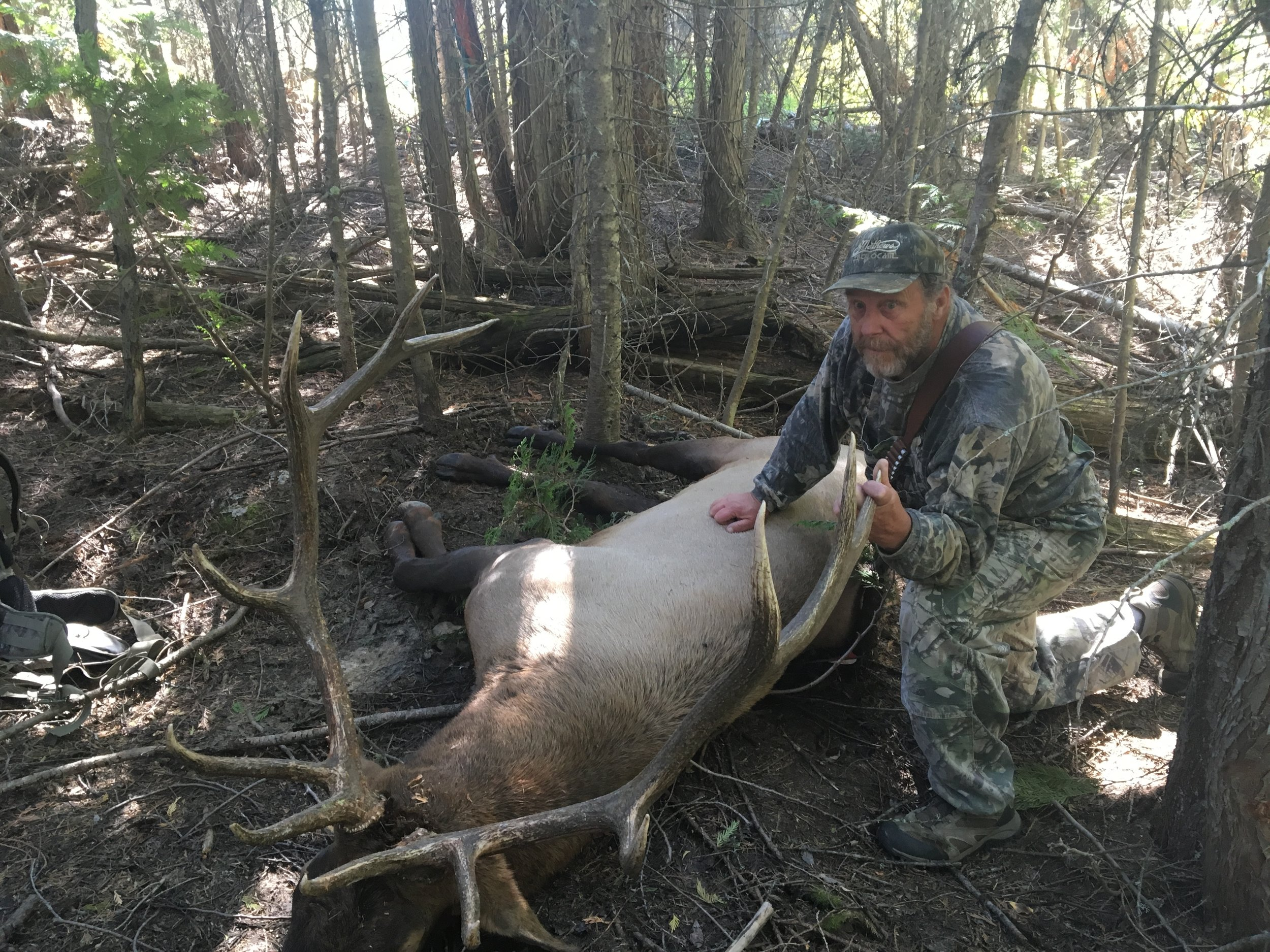 Washington State- Elk, 2016